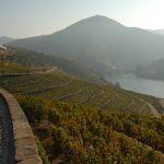 10 de setembro: Dia do Vinho do Porto