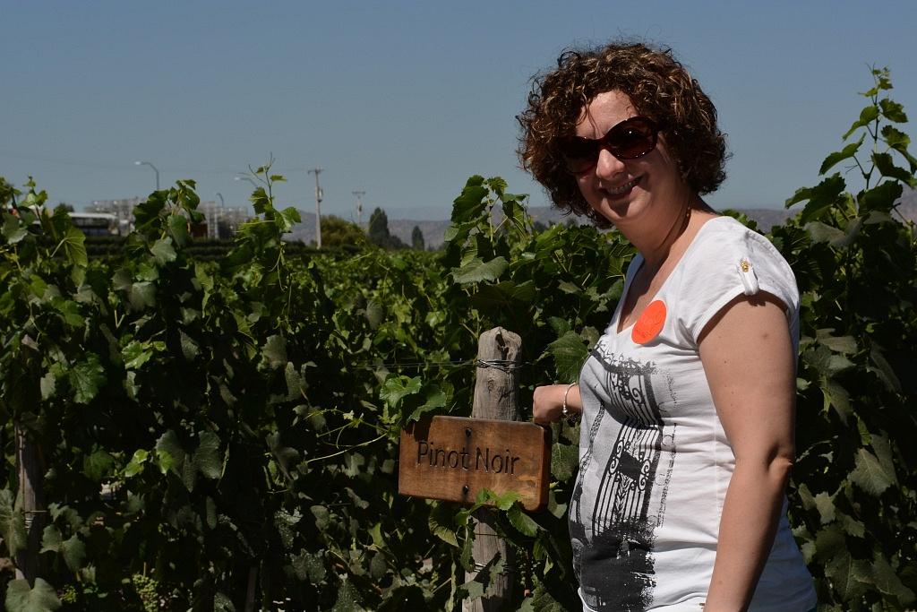 Plantação de Pinot Noir na propriedade da Concha Y Toro, no Chile