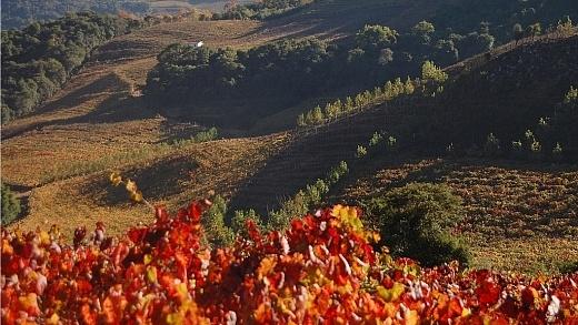 Outono no Vale dos Vinhedos
