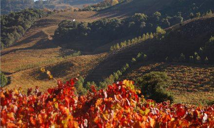 O outono chega ao Vale dos Vinhedos