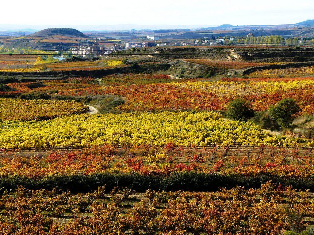 Vinhedos de Ribera del Duero, Espanha