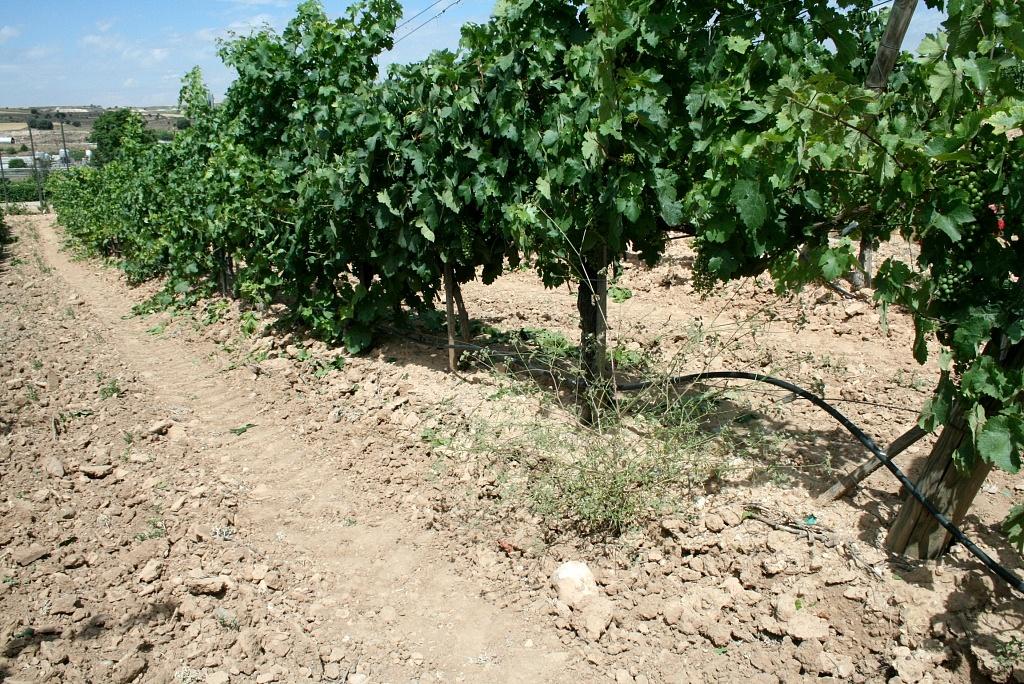 Terroir em Ribera del Duero, Espanha