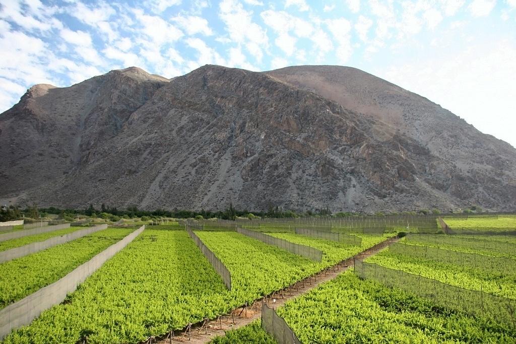 Vale Elqui, Chile