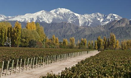 Vinho chileno: um velho – e bom – conhecido!