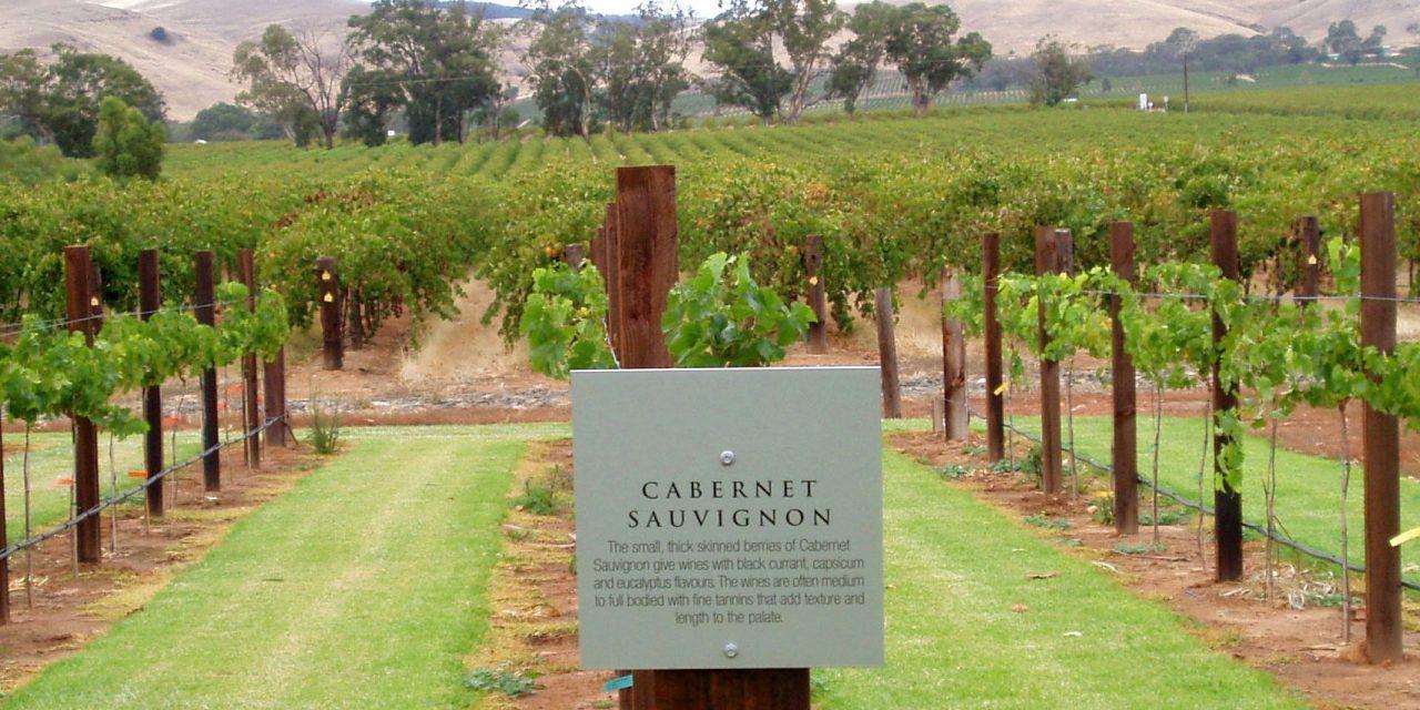 11 Curiosidades sobre a Cabernet Sauvignon