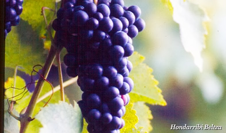 cacho uva