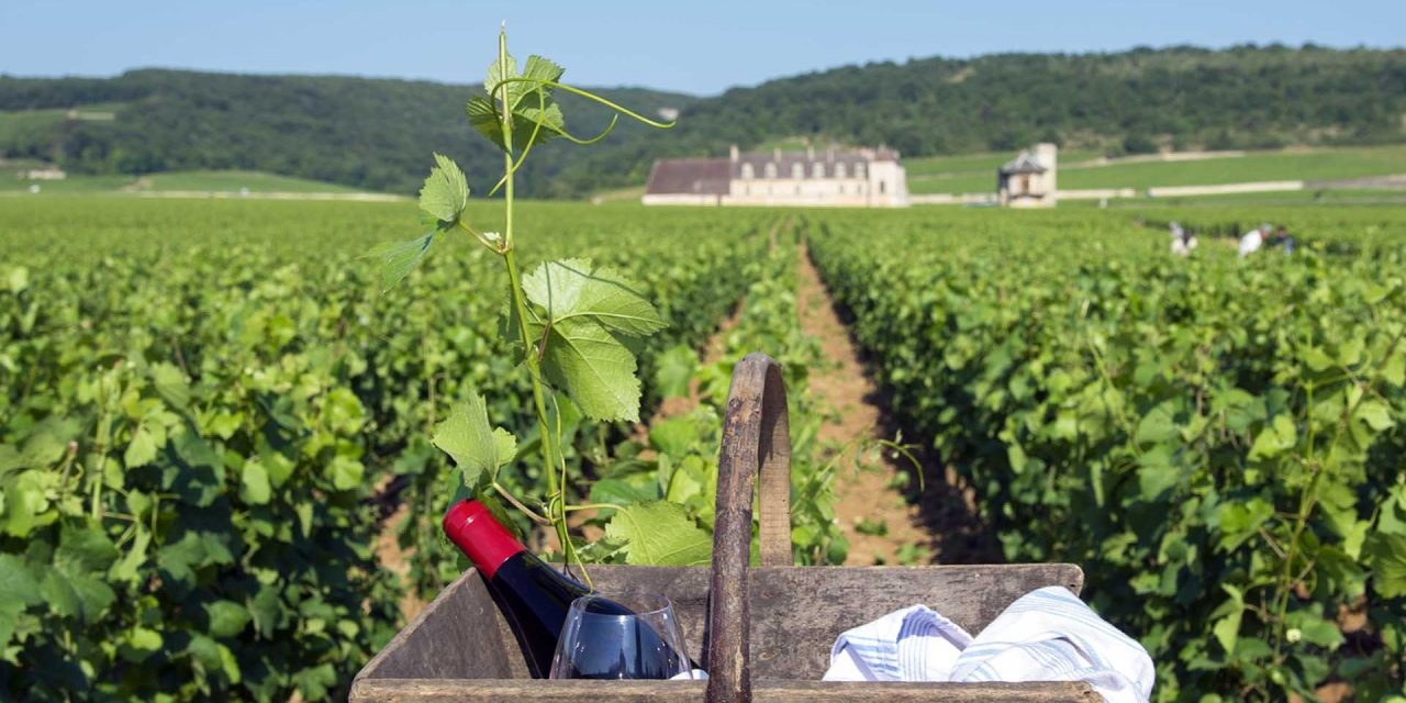O que a Borgonha oferece aos amantes do vinho