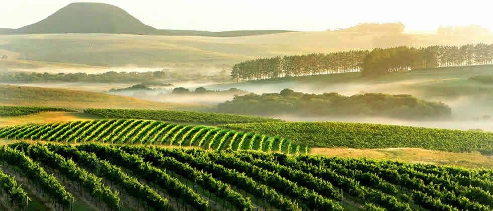 Campanha Gaucha - Viva o Vinho