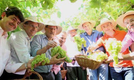 Otimismo marca abertura oficial da safra da uva no RS