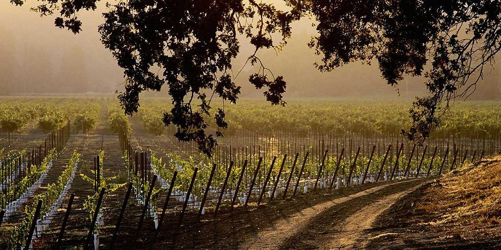 Sonoma Valley, Califórnia, Evento Vinhos da Califórnia, Viva o Vinho