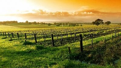 Napa Valley, Califórnia, Evento Vinhos da Califórnia, Viva o Vinho