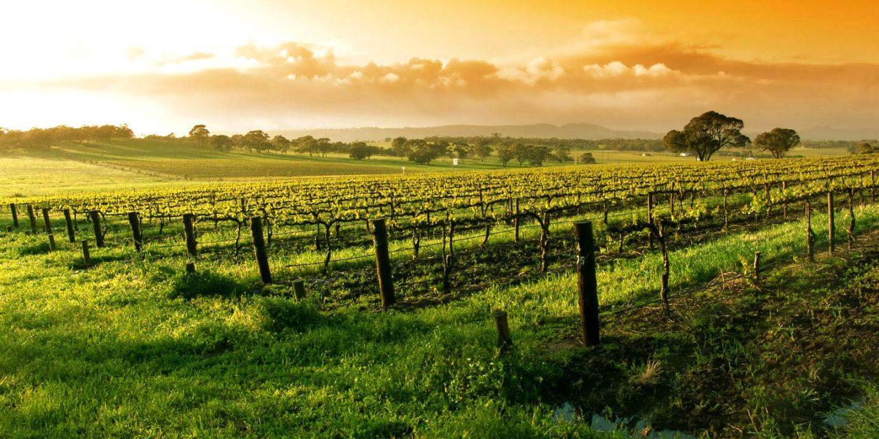 A Califórnia e os vinhos que incomodaram os franceses