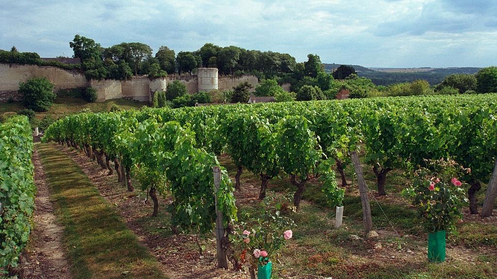 Cabernet Franc, Viva o Vinho