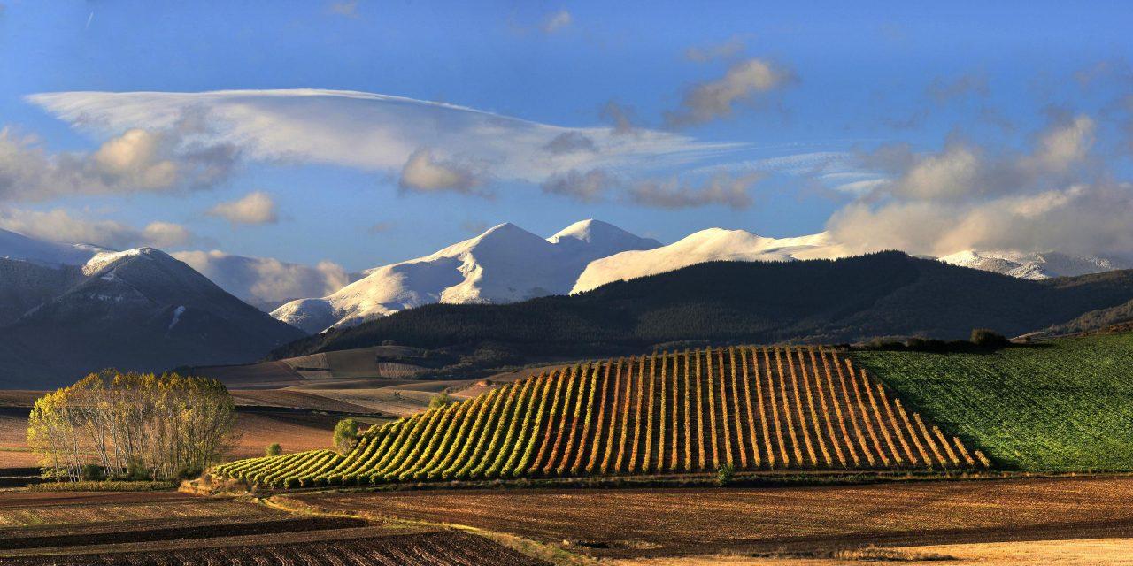 Rioja é a principal região vinícola da Espanha