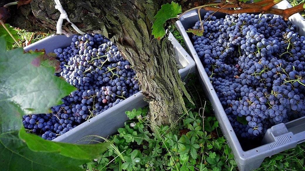 Evento Cabernet Franc, Viva o Vinho