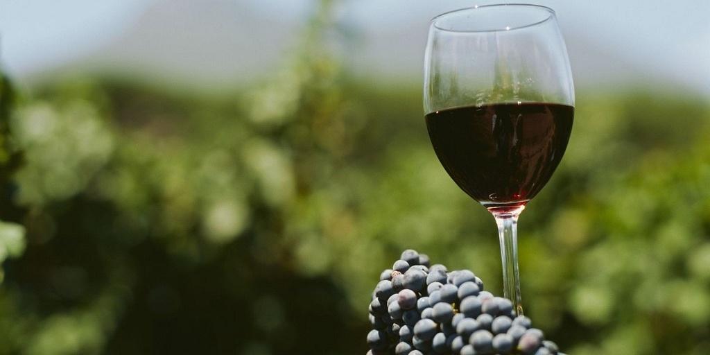Rioja, Viva o Vinho