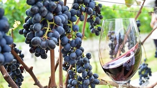 Uva e vinho - FOTO Gilmar Gomes