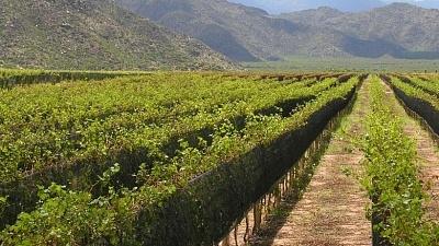 Rioja, Espanha - Viva o Vinho