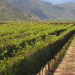 Os vinhos amadeirados de Rioja