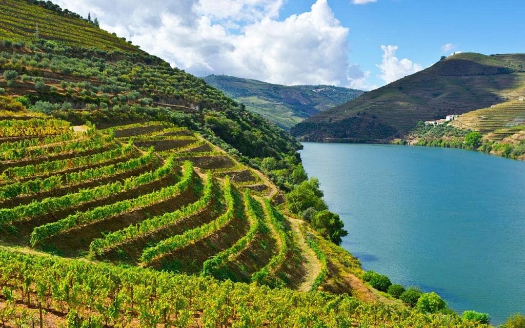 Douro, Viva o Vinho