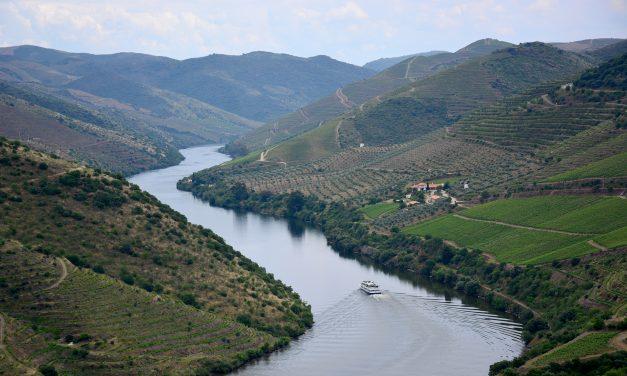 Vinhos e azeites no Douro: quatro dias na DOP mais antiga do mundo