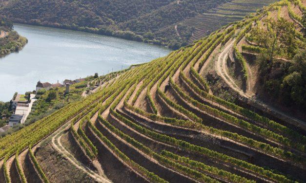 """Real Companhia Velha convida para """"Harvest Experience"""" no Douro"""