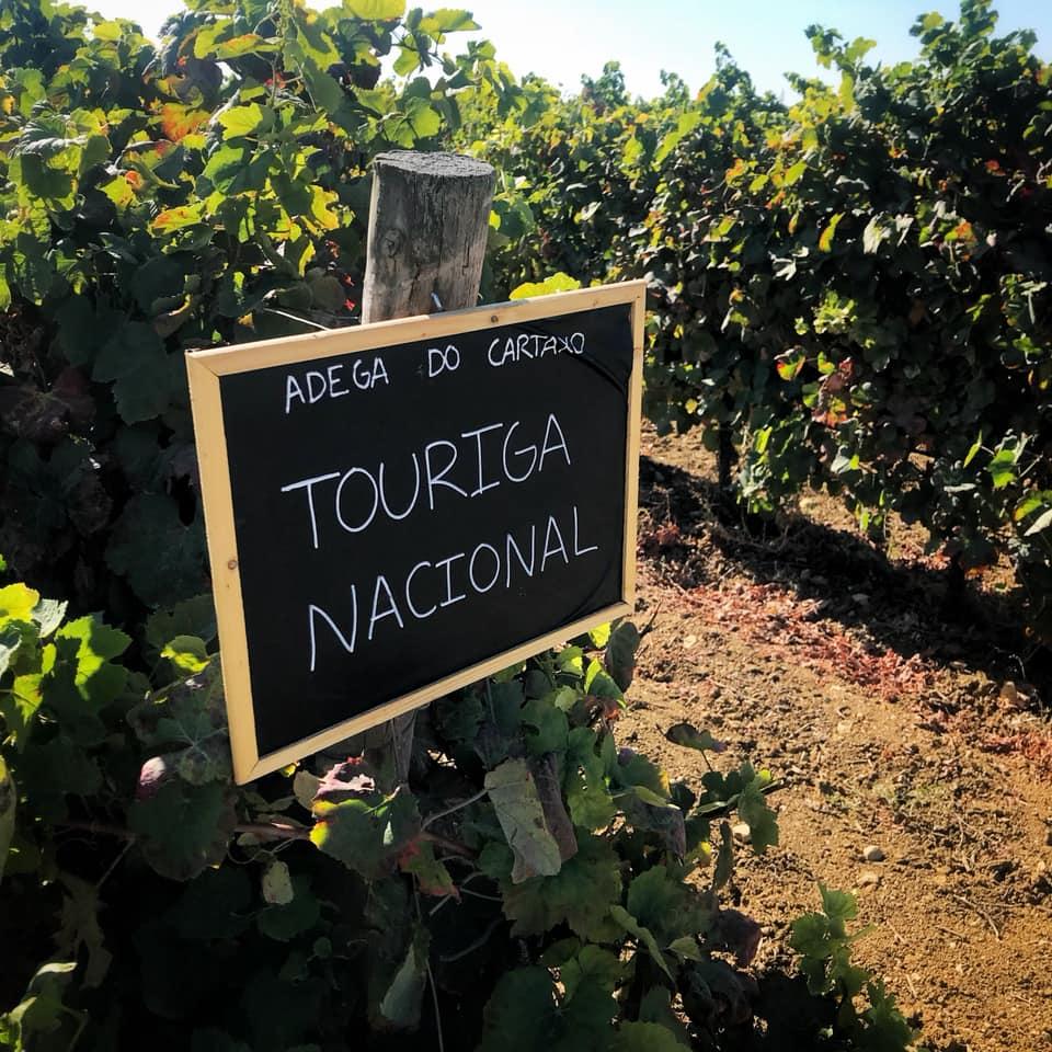 Adega do Cartaxo - Viva o Vinho