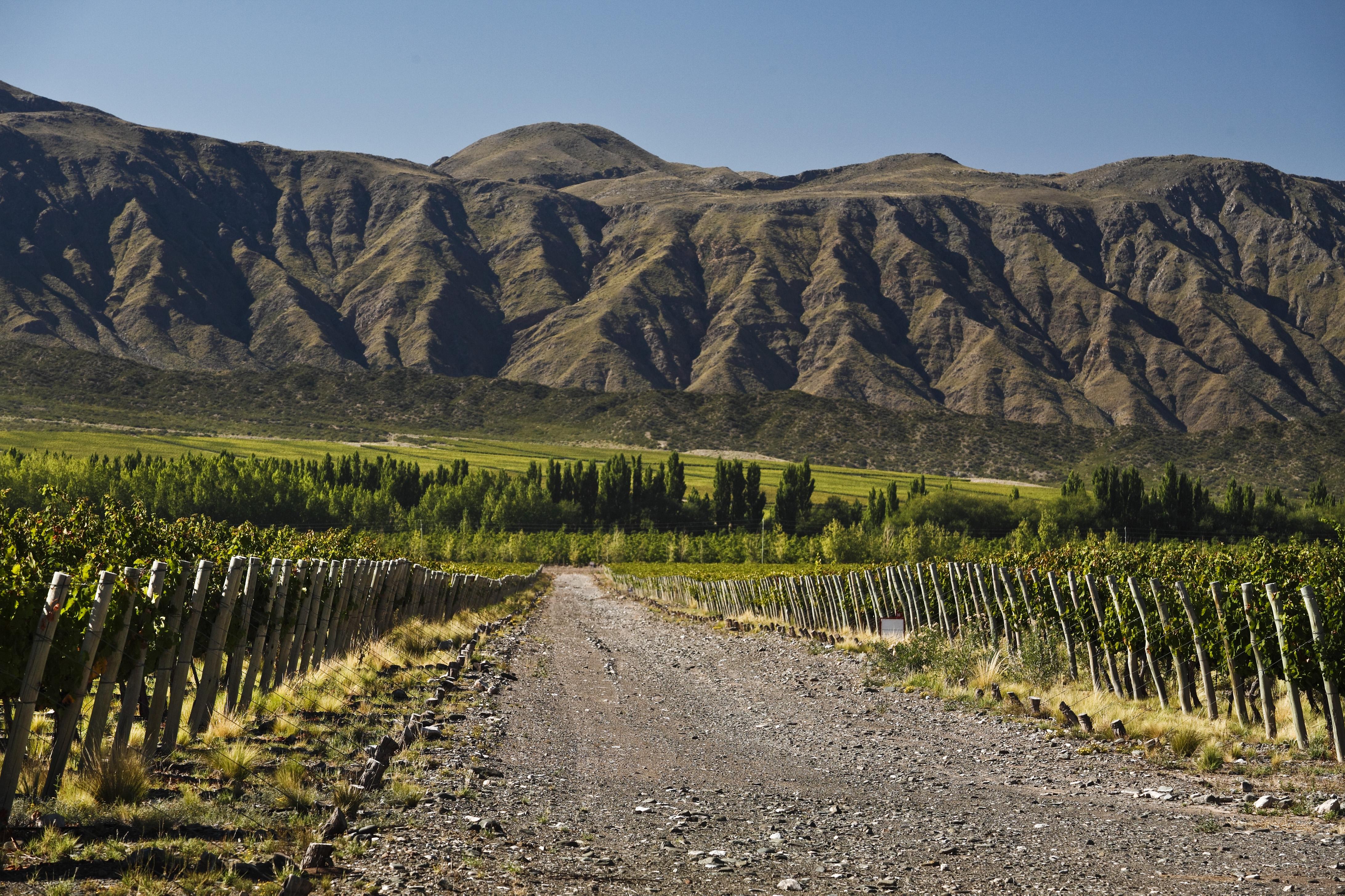 Wines of Argentina - Viva o Vinho