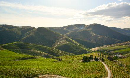 Quinta da Leda: tradição e inovação em perfeita harmonia