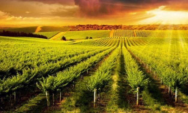 Tecnologia IBM otimiza produção de vinhos na Argentina