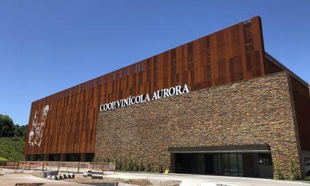 Líder de mercado, Vinícola Aurora celebra 89 anos com faturamento histórico de R$ 558 milhões